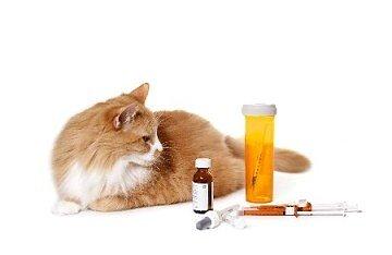 Ветеринарная диета